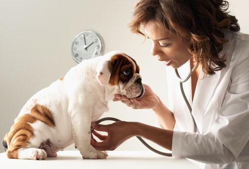 5 passos para tornar sua clínica veterinária um ambiente agradável